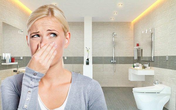 Nhà vệ sinh có mùi hôi, nấm mốc, vi khuẩn